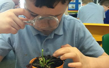 Year 2 Botanists
